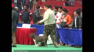 Delhi Kennel Club Dog Show By Ryder Kennel