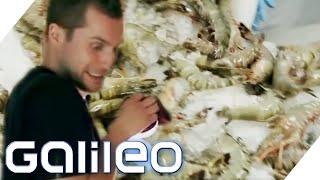 Galileo testet Berufe | Galileo | ProSieben
