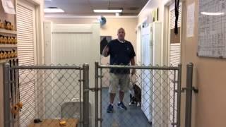 Full Dog Training Case Study- Solving Dog Aggression
