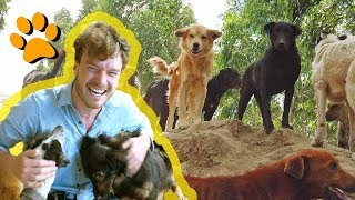 Real Life Dog Heaven - ADVA Animal Rescue Shelter Ecuador - Volunteer With Animals