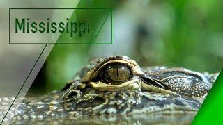 Mississippi - La Gran Barrera Parte 1 de 2 - Los Secretos de la Naturaleza