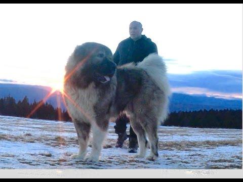 Jozo Dogs - Don Bizon & Sibirija   snimanje na Rancu