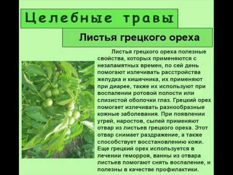 Листья грецкого ореха - YouTube