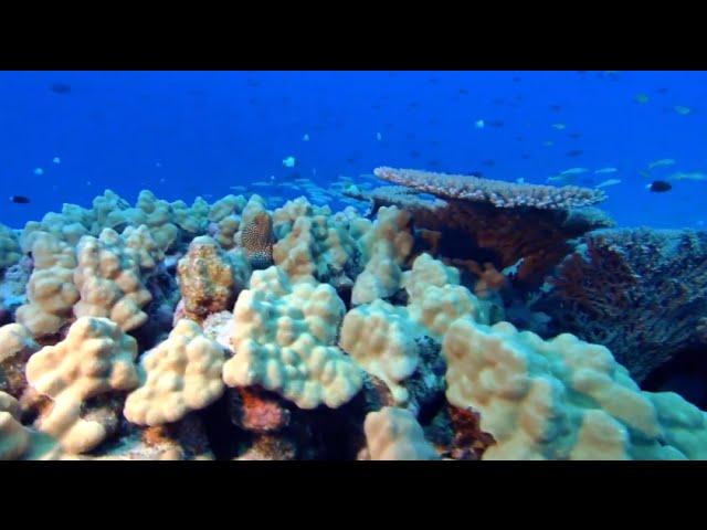 Even healthy corals have viruses