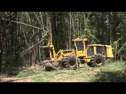 Bamboo for Biomass