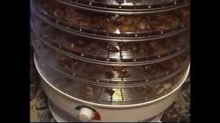 видео Сушилки для ягод и фруктов