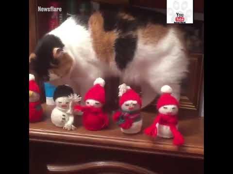 Cat Knocks Christmas Decorations Off Worktop