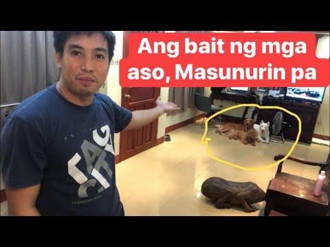 ang-bait-ng-mga-aso,-masunurin-pa-♥️