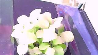 видео: timeless Проращивание салата на АЭРОпонике