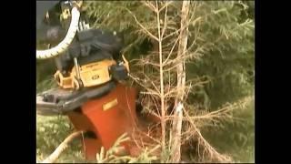 Wycinanie drzew, wycinka lasu, roboty leśne, wyrąb lasu,