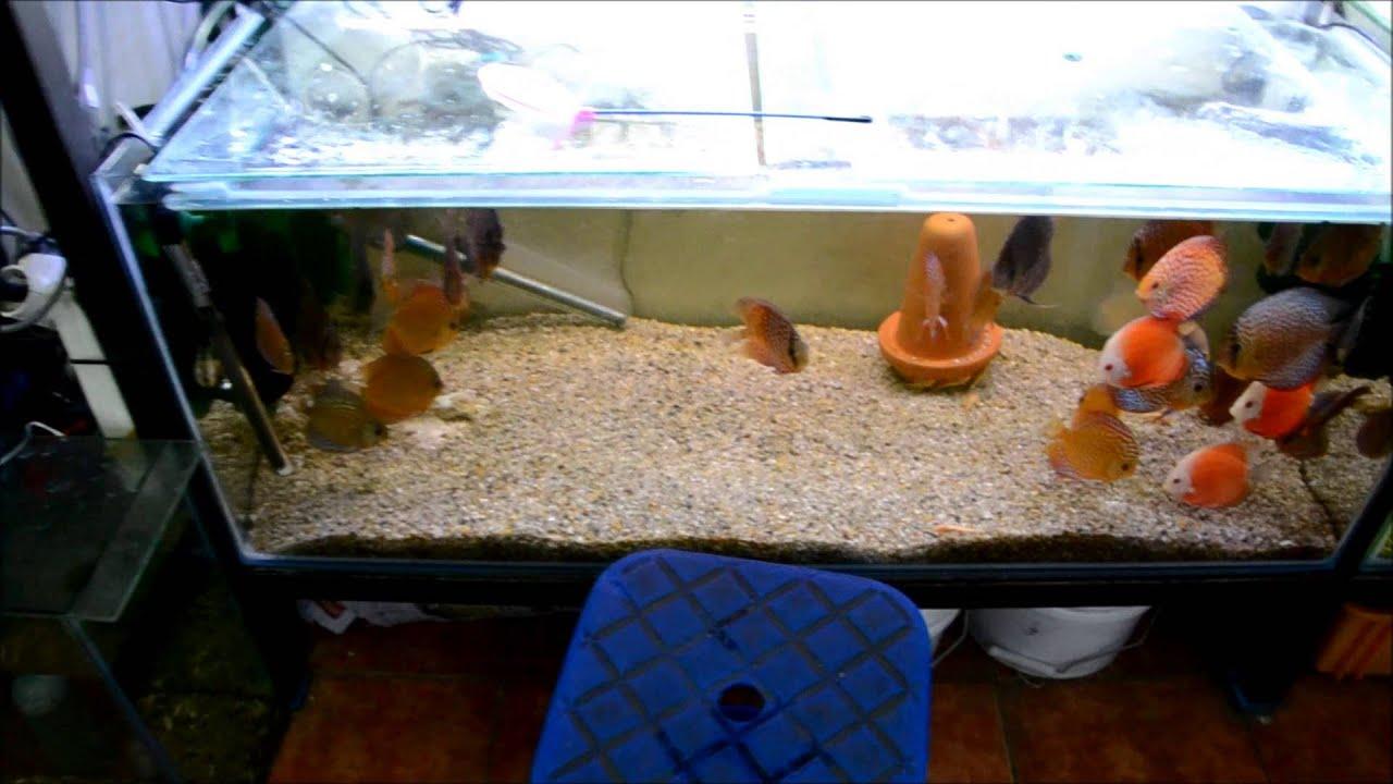 Freshwater fish korea - Seoul Korea Cheonggyecheon Aquarium Street Quest For The Asian Arowana Youtube
