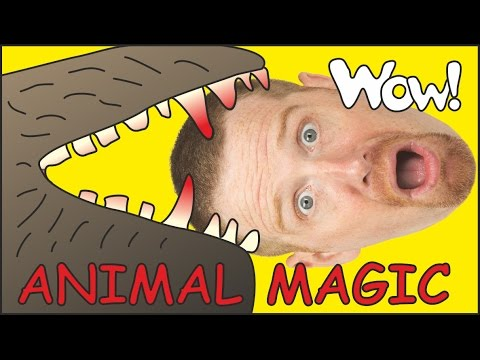 Animal Magic with Maggie and Steve   English Stories for Kids   Wow English TV