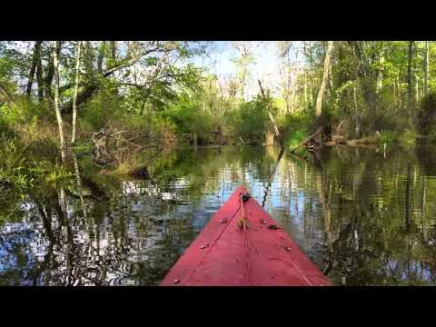 Beavers on the Rancocas
