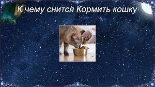 К чему снится Кормить кошку (Сонник)
