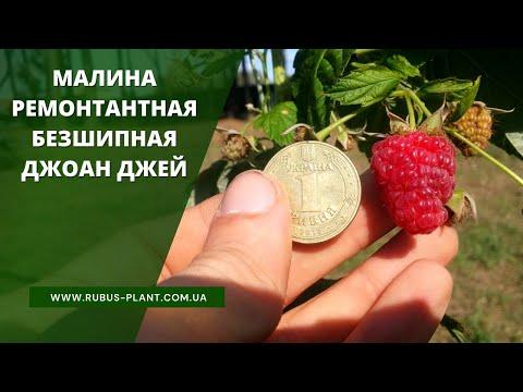 Видеообзор малина джоан джей 21,09,2018