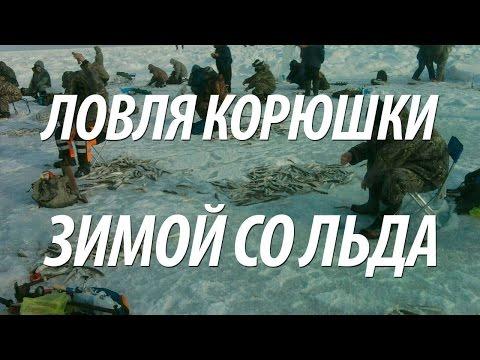 ловля хариуса зимой в ленинградской области