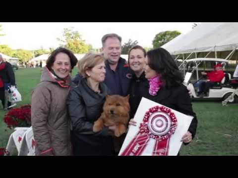 Road to Westminster (RTW): Best in Show at Montgomery County Kennel Club