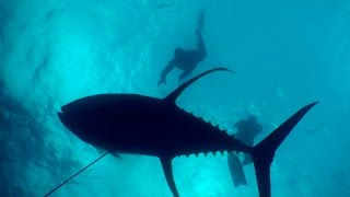Acession Island Spearfishing