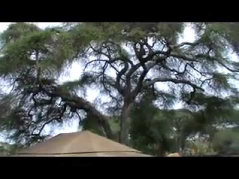 Tanzania Safari Tarangire, Ngorongoro Crater, Serengeti and Selous National Park Part One