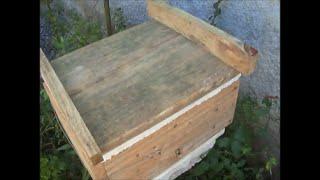 posso dividir abelha jatai logo depois que sai do inverno