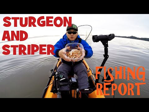 White Sturgeon And Striped Bass Fishing Report