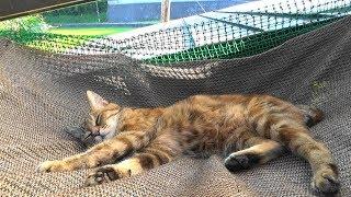 母さん猫のハンモック生活 Mother Cat Discovered The Hammock Life