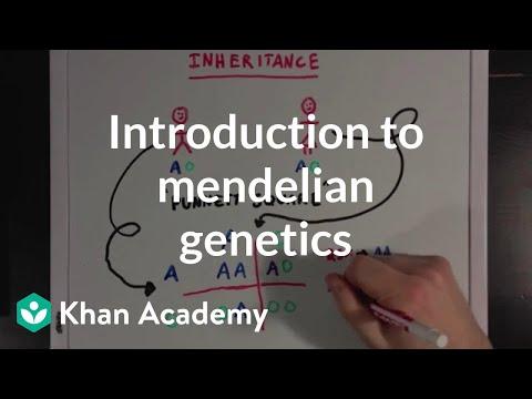 An Introduction to Mendelian Genetics   Biomolecules   MCAT   Khan Academy