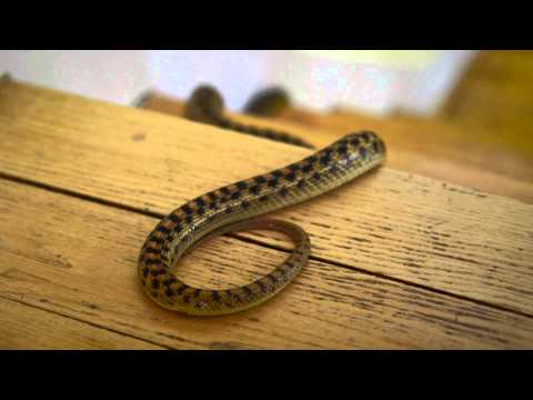Learn How to Keep Snakes Out of Your House