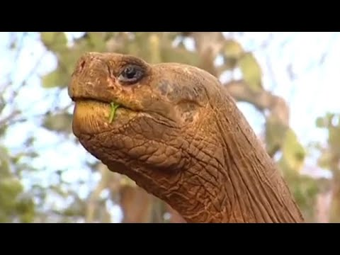 The loneliest animal on the planet - BBC Animals