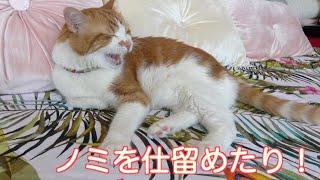【閲覧注意】こんな映像が撮れるなんて!猫は不機嫌な顔になったw
