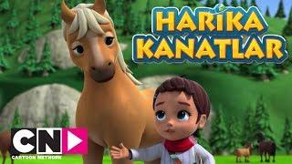 Harika Kanatlar I Kayıp Tay I Cartoon Network