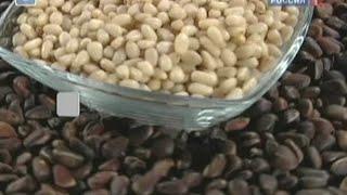 Кедровые орехи - польза и вред. Чем полезен кедровый орех