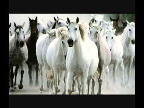 Cavallo Bianco-Matia Bazar