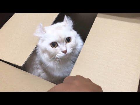 びっくり箱