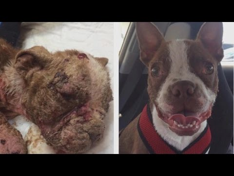 Puppy Neglected By Breeder, Riddled With Infections Makes Astonishing Recovery
