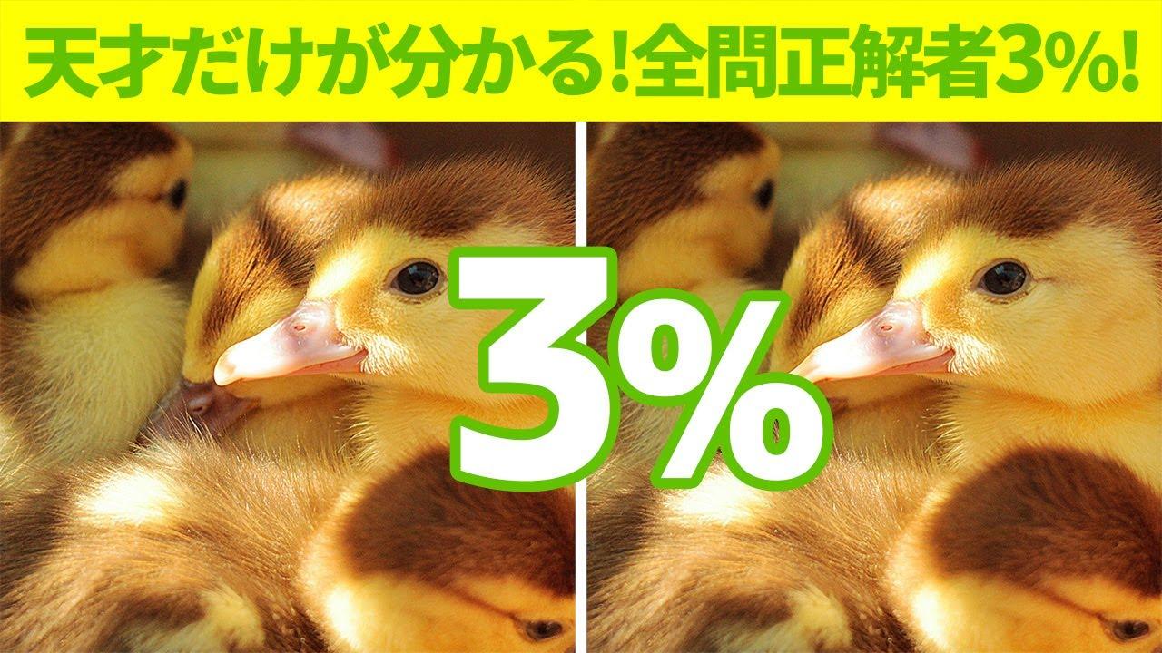 【動物の間違い探し】全問正解者3%!【10分脳トレ IQテスト】