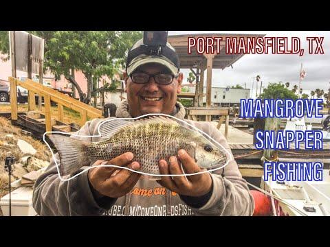 Dock Fishing For Mangrove Snapper | Port Mansfield, TX