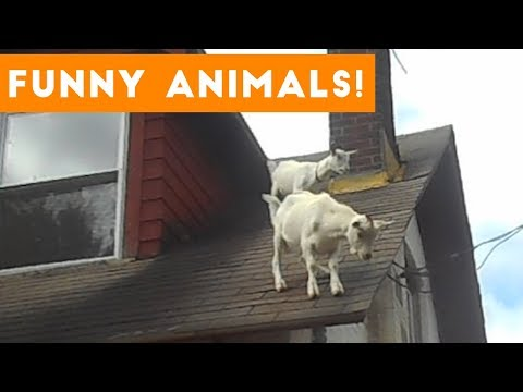 Funniest Pets of the Week Compilation October 2017 | Funny Pet Videos