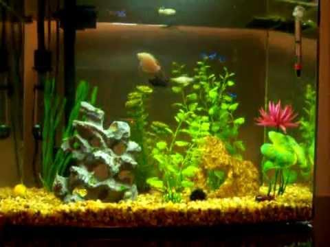 My marineland 12 gallon eclipse aquarium youtube for Eclipse fish tank