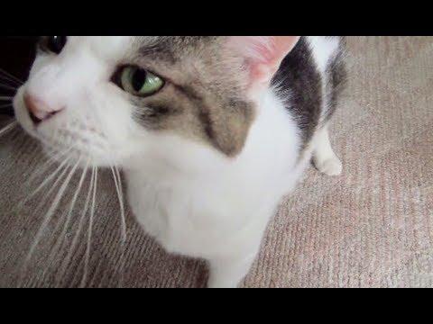 【のらの精いっぱいの甘えん坊】Cats are modestly sweet to their owners.