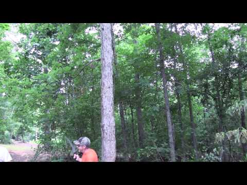 Hinge Cutting Tutorial: Conventional Tree Felling Vs. Hinge Cutting