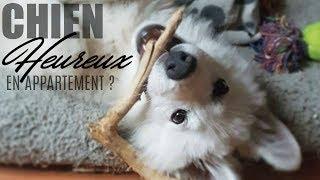 Peut-on vivre avec un chien en appartement ?