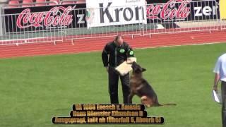 Repeat youtube video 2013 SV BSZS Kassel TSB-Überprüfung Rüden (GHKR) part 1 VA