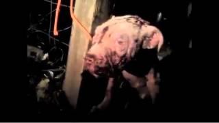 Denuncian maltrato de un perro en Celaya