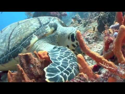 Climate Change Report - The Sea Turtles of Ascension Island