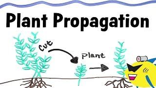 How To Propagate Aquarium Plants
