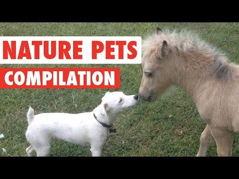 Nature Pets Video Compilation 2016