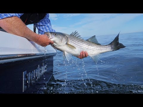 Casting & Jigging For Striped Bass At The Monomoy Shoals