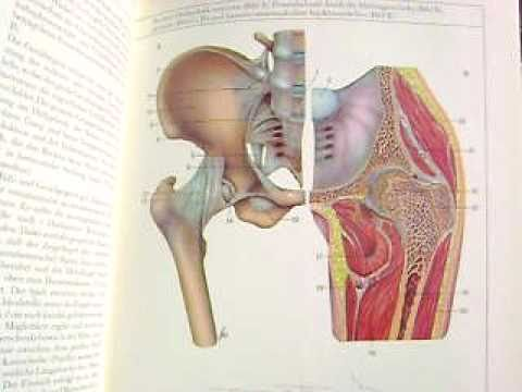 Anatomy And Physiology The Joints Of The Body The Hip Youtube