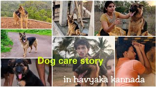 our dog story in havyaka kannada / German shepherd Dog care